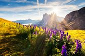 image of south tyrol  - Great view on the  Odle  - JPG