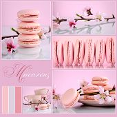 stock photo of shabby chic  - Pink Macarons Collage with vintage shabby chic theme and spring blossoms with sample text and color swatches - JPG