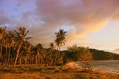 Постер, плакат: Palm Trees At The Seaside Under Pink Sunset Light