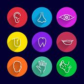 stock photo of ear  - icons set of human bodies - JPG