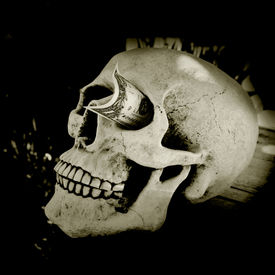foto of eye-sockets  - Skull with a dollar stuck in his eye socket - JPG