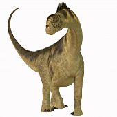 stock photo of herbivore animal  - Camarasaurus was a sauropod herbivore dinosaur that lived in the Jurassic Era of North America - JPG