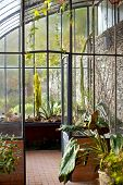 picture of greenhouse  - Green plants in an old stylish greenhouse - JPG