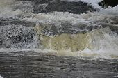 stock photo of bohemia  - rapidly flowing water on the winter river  - JPG