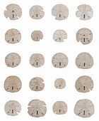foto of sanddollar  - 20 different sand dollars in excellent condition are arranged in a grid pattern on white background - JPG