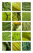 picture of vegetation  - Collage of various green textures - JPG