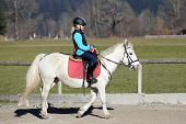 image of horse-breeding  - young girl is riding on a white horse