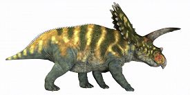 pic of herbivore  - Coahuilaceratops was a herbivore that lived in the Cretaceous Era of Mexico - JPG