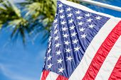 foto of flag pole  - American flag closeup with palm tree in background - JPG