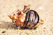 picture of hermit crab  - hermit crab on a beach in Andaman Sea - JPG
