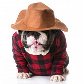 pic of dog clothes  - country dog  - JPG