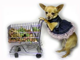 picture of bag-of-dog-food  - a female chihuahua walking in the grocery store - JPG