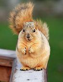 Cute Squirrel Begging poster