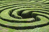 pic of maze  - A complex hedge maze on a summers day - JPG