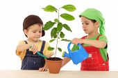 image of flower pots  - Little children caring for plant isolated on white - JPG