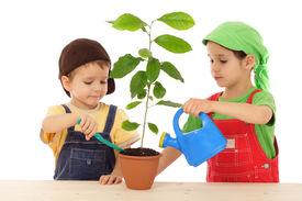 stock photo of flower pot  - Little children caring for plant isolated on white - JPG