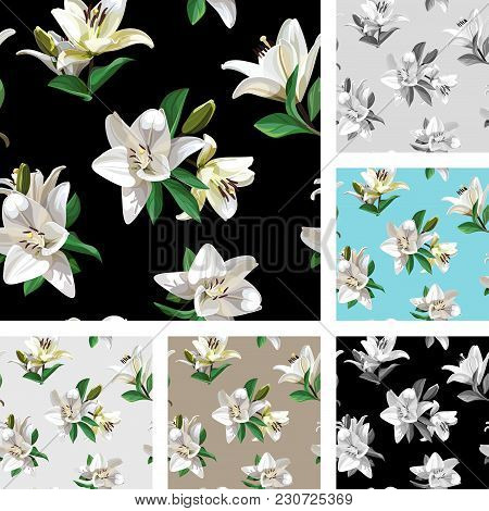 White Flowers Of Lily madonna