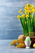Easter holiday card with eggs yellow spring flower narcissus in wicker basket with copyspace on blue poster