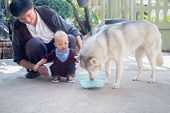 Happy Asian Father And Cute Toddler Baby Boy Feeding Adorable Siberian Husky Dog At Home, Kid And Pe poster