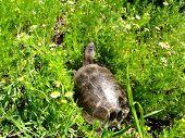 The Turtle Has Hidden poster