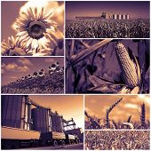 Agricultural Crops .collage Of Photographs Showing Agricultural Crops In Cultivated Agricultural Fie poster