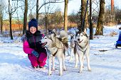 Girl Playing With Sled Dogs Siberian Husky In Snow poster
