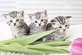 Cute Kitten And Flowers. Lovely Kitten. Kitty poster
