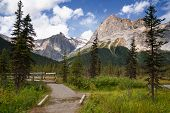 Hiking Trail Around Emerald Lake, Yoho National Park, British Columbia, Canada poster