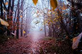 Fantastic Mysterious Foggy Morning In The Autumnal Forest. Moody Background With Colorful Trees. Ora poster