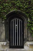 picture of english ivy  - Typical old English door with green ivy above the entrance - JPG