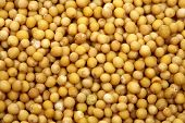 foto of mustard seeds  - mustard seeds - JPG