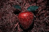 Strawberry Artificial Plastic Decoration.strawberry For Decoration Artificial Fruit Ornaments Artifi poster