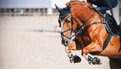 A Sorrel Beautiful Horse With A Rider In The Saddle Jumps High At A Show Jumping Competition On A Su poster