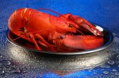 stock photo of cooked blue crab  - Red lobster on tray - JPG