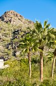 pic of piestewa  - Palm Trees With Piestwea  - JPG