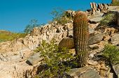 picture of piestewa  - Cactus on the Side of Piestewa  - JPG