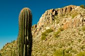 pic of piestewa  - Beautiful Piestewa  - JPG