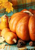 Autumn still life with pumpkins on fabric background
