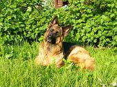 stock photo of foxhound  - Funny dog - JPG