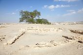 foto of bahrain  - The Tree of Life in the desert of Bahrain Middle East - JPG