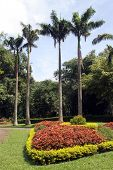 pic of royal botanic gardens  - Palm trees and flower bed in royal botanical garden Peradeniya Sri Lanka - JPG