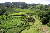 stock photo of cameron highland  - Dirt road on the tea plantation in Cameron Highlands Malaysia
