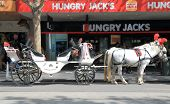 Horse carriage Melbourne