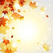 picture of fall trees  - Fall maple leaves on sunny light background - JPG