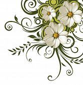 foto of daisy flower  - drawing of flower in a white background - JPG