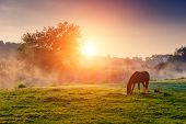 foto of wild adventure  - Arabian horses grazing on pasture at sundown in orange sunny beams - JPG