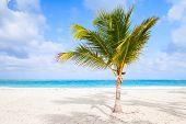 pic of atlantic ocean beach  - Palm tree on sandy beach - JPG