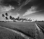 stock photo of tamil  - Rural Indian scene  - JPG