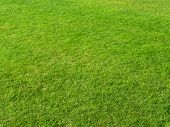 stock photo of grass area  - Close up of green grass field in summertime - JPG