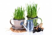 stock photo of pot  - Grass in pots and garden tools isolated on white background - JPG
